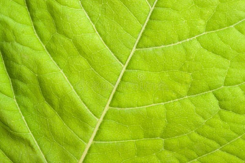στενό πράσινο φύλλο επάνω στοκ εικόνες