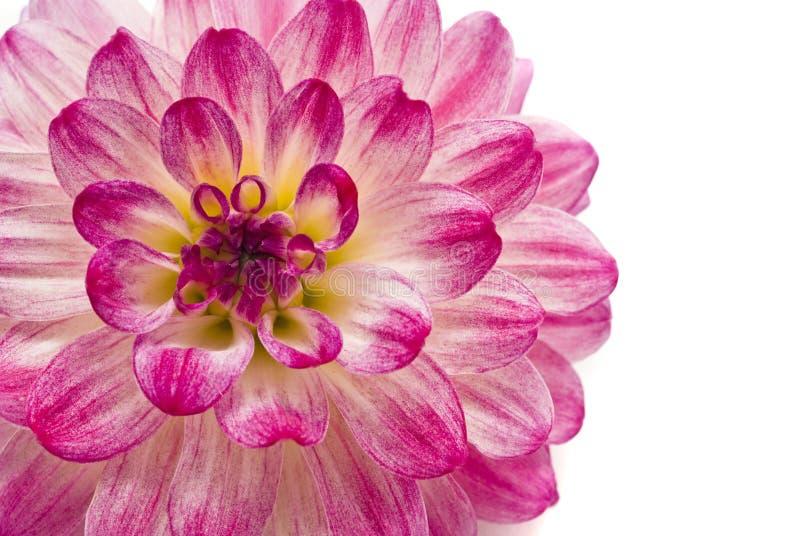 στενό ροζ νταλιών επάνω στοκ εικόνα