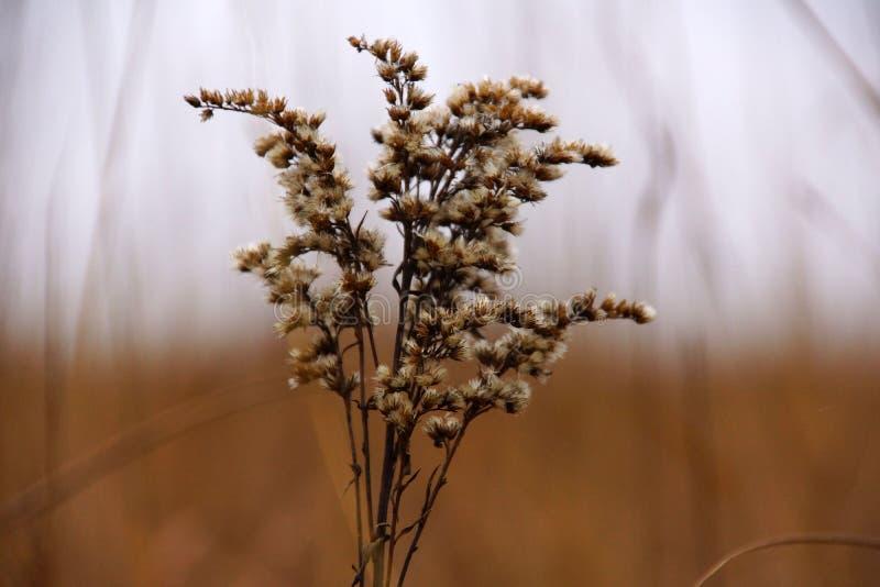 στενό φυτό επάνω στοκ εικόνα με δικαίωμα ελεύθερης χρήσης