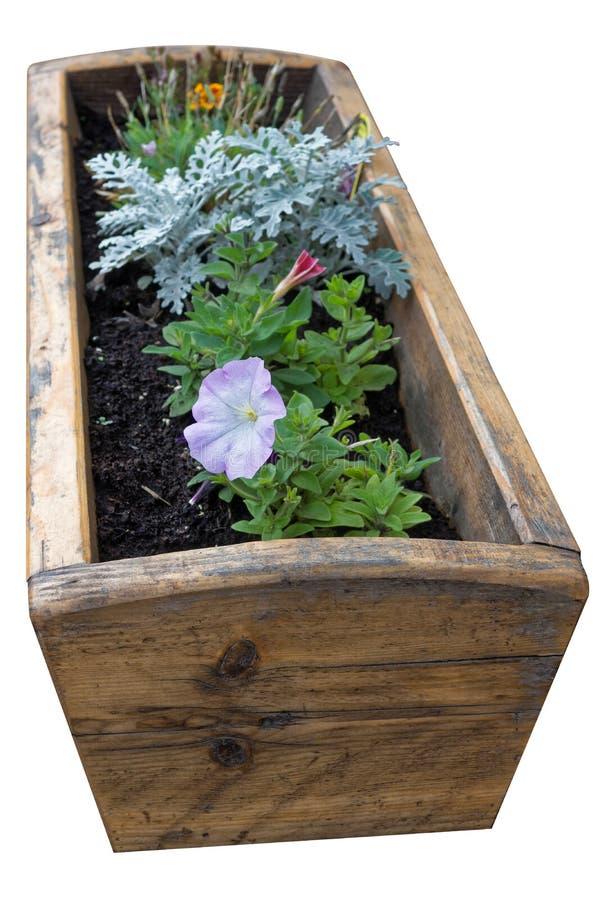 Στερεά ξύλινη κιβώτιο ή γούρνα λουλουδιών σχεδίου με τα όμορφα λουλούδια που αυξάνονται στο καλά ποτισμένο χώμα στοκ φωτογραφία με δικαίωμα ελεύθερης χρήσης
