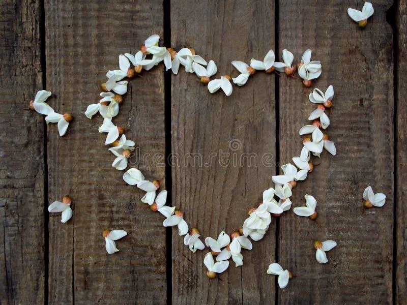Στεφάνι καρδιών των άσπρων πετάλων λουλουδιών ακακιών ανθίζοντας στο σκοτεινό ξύλινο υπόβαθρο στοκ φωτογραφίες