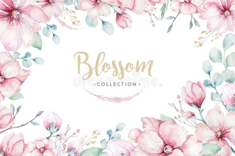 Στεφάνι των ρόδινων λουλουδιών κερασιών ανθών στο ύφος watercolor με το άσπρο υπόβαθρο Σύνολο ιαπωνικού sakura θερινής άνθισης απεικόνιση αποθεμάτων