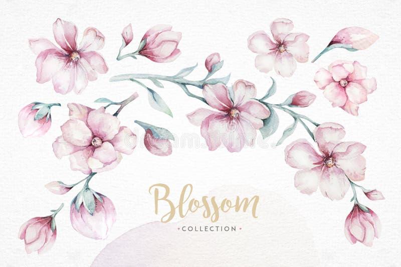 Στεφάνι των ρόδινων λουλουδιών κερασιών ανθών στο ύφος watercolor με το άσπρο υπόβαθρο Σύνολο ιαπωνικού sakura θερινής άνθισης ελεύθερη απεικόνιση δικαιώματος