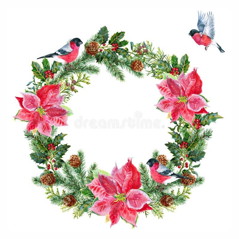 Στεφάνι Χριστουγέννων με τα bullfinches και το poinsettia οικολογικός ξύλινος διακοσμήσεων Χριστουγέννων watercolor διανυσματική απεικόνιση