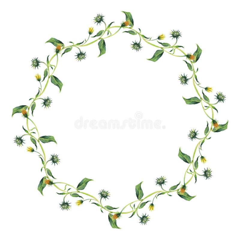 Στεφάνι Watercolor Κίτρινο λουλούδι με τα πράσινα φύλλα απεικόνιση αποθεμάτων