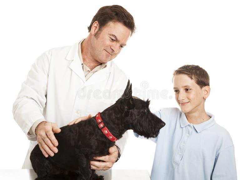 στην κτηνιατρική επίσκεψη στοκ φωτογραφία με δικαίωμα ελεύθερης χρήσης