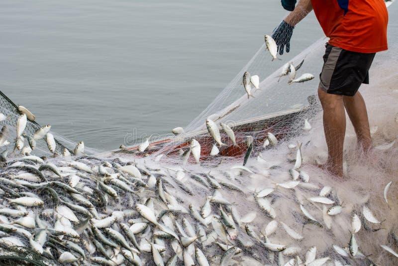 Στη βάρκα ψαράδων, που πιάνει πολλά ψάρια στοκ εικόνες