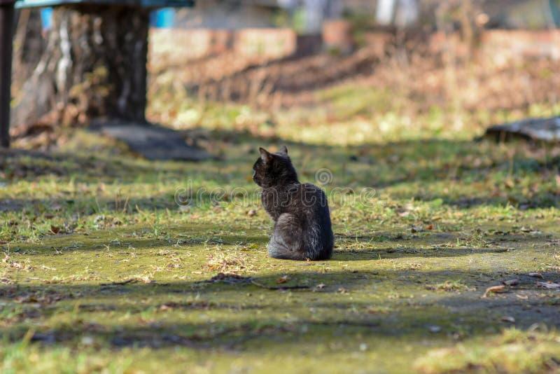 Στη γη η γάτα έχει τα τρόφιμα και αναμένει με ενδιαφέρον στοκ φωτογραφίες
