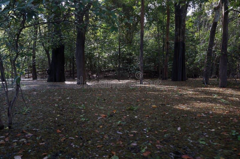 Στις άγρια περιοχές στοκ εικόνες