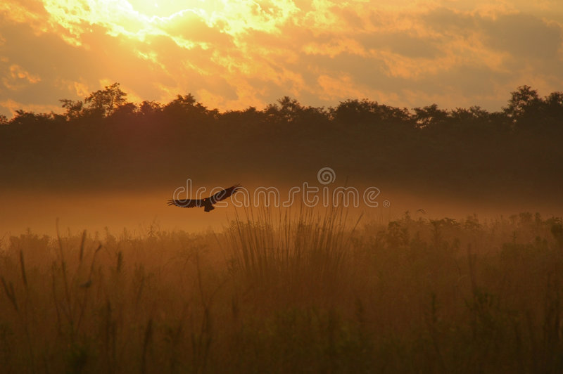 στις αρχές πρωινού πτήσης στοκ εικόνες με δικαίωμα ελεύθερης χρήσης