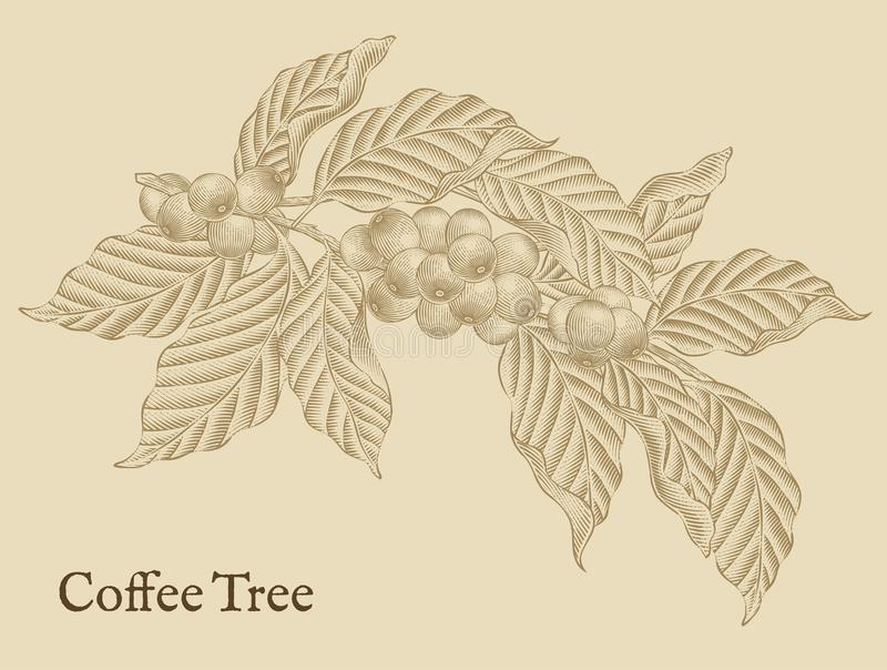 Στοιχεία δέντρων καφέ διανυσματική απεικόνιση