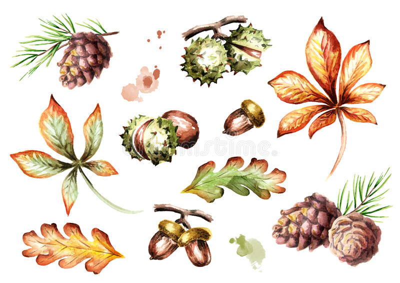 Στοιχεία φθινοπώρου καθορισμένα η διακοσμητική εικόνα απεικόνισης πετάγματος ραμφών το κομμάτι εγγράφου της καταπίνει το watercol ελεύθερη απεικόνιση δικαιώματος