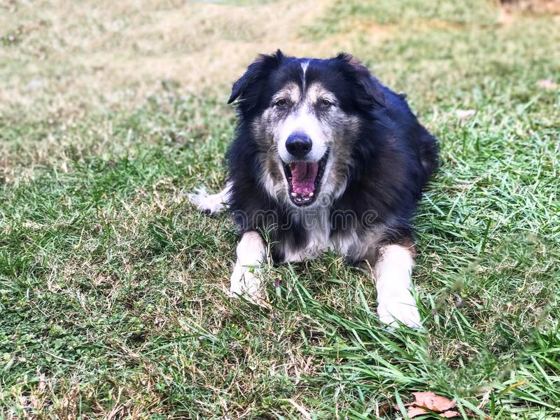 Στοματικό ανοικτό σκυλί στοκ φωτογραφίες με δικαίωμα ελεύθερης χρήσης