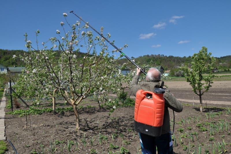 Στον κήπο φρούτων, ο αγρότης ψεκάζει τα δέντρα στοκ φωτογραφίες με δικαίωμα ελεύθερης χρήσης