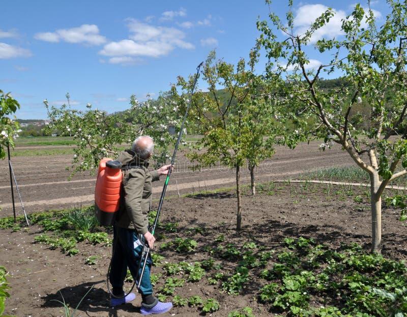 Στον κήπο φρούτων, ο αγρότης ψεκάζει τα δέντρα στοκ εικόνες