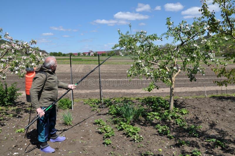 Στον κήπο φρούτων, ο αγρότης ψεκάζει τα δέντρα στοκ φωτογραφίες