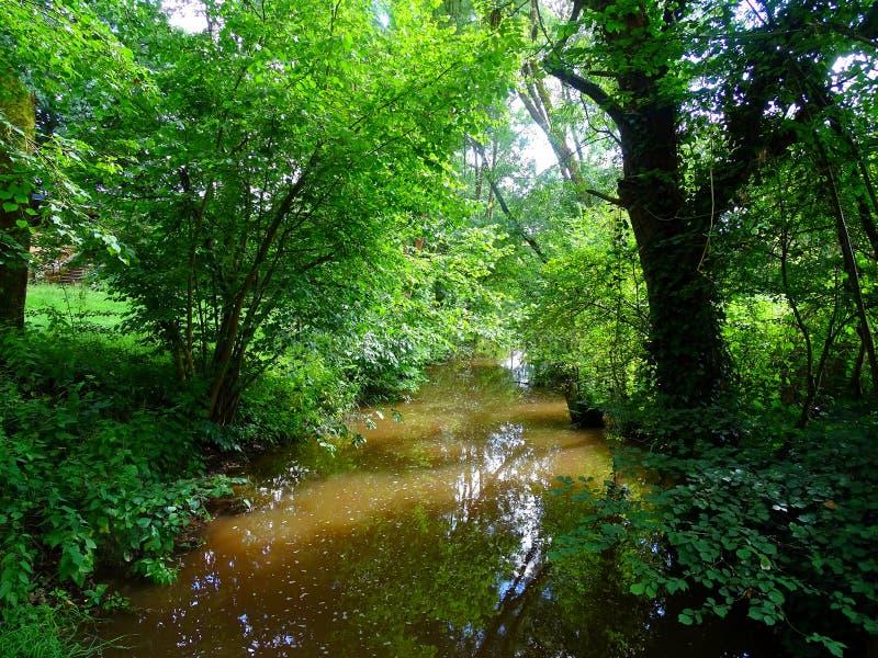 Στον όμορφο κολπίσκο βαθιά στο δάσος στοκ φωτογραφία με δικαίωμα ελεύθερης χρήσης