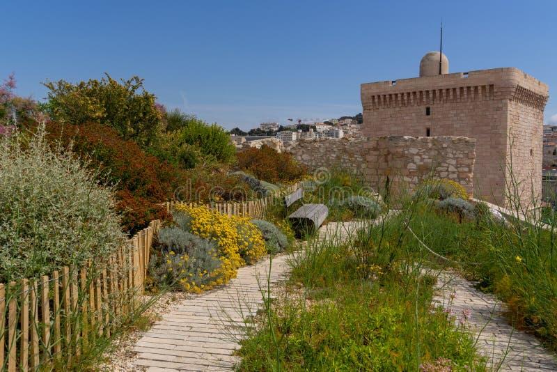 Στους κήπους μουσείων Mucem των εγκαταστάσεων και των καρυκευμάτων στοκ εικόνα