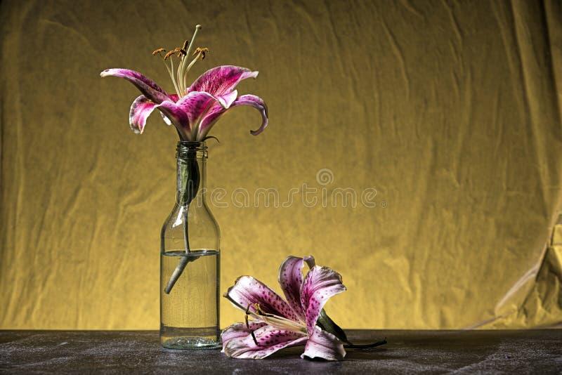 Στούντιο που πυροβολείται των πορφυρών lillies στοκ εικόνες