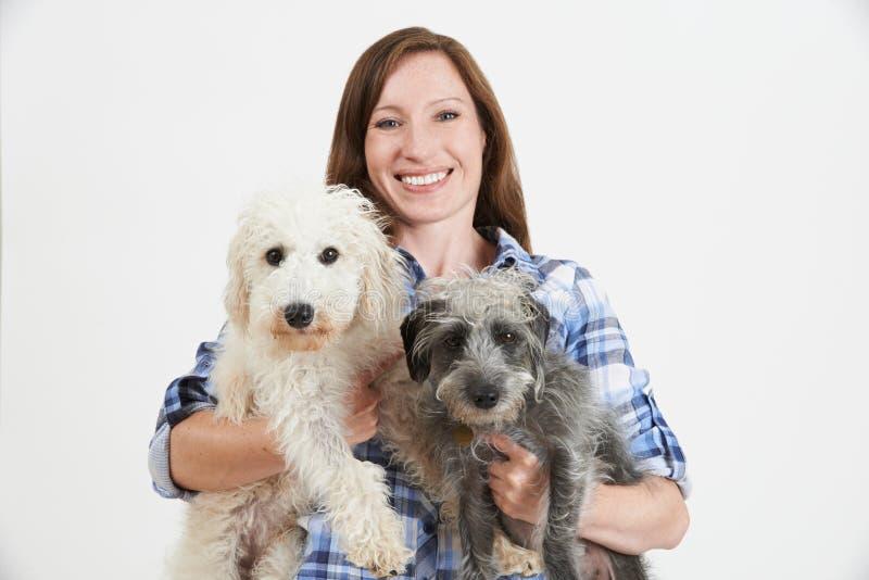 Στούντιο που πυροβολείται της γυναίκας με δύο Lurcher της Pet σκυλιά στοκ φωτογραφίες