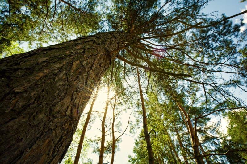 Στο δάσος, αφαιρέστε το φυσικό τοπίο στοκ εικόνα με δικαίωμα ελεύθερης χρήσης