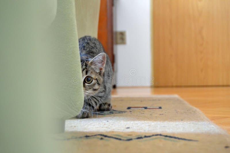 Στο μάτι της γάτας στοκ φωτογραφία