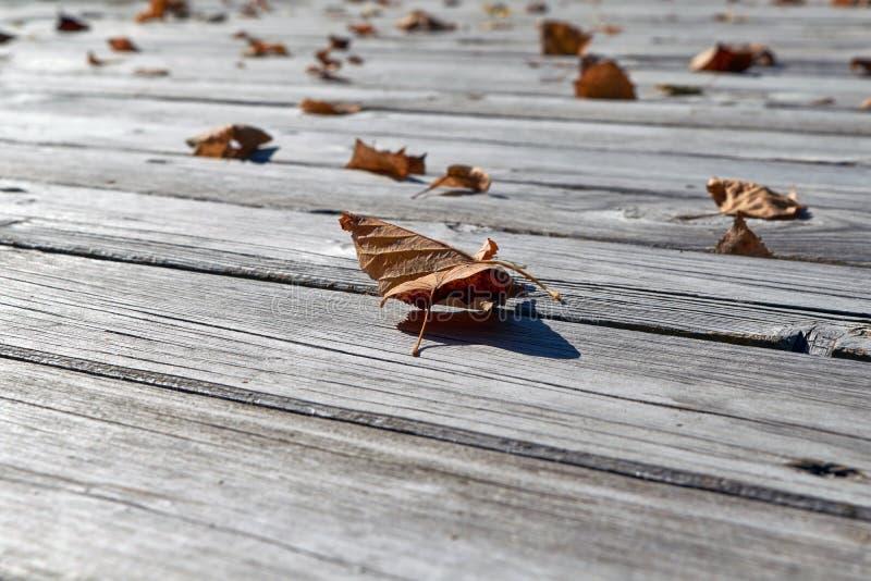 Στο ξύλινο πάτωμα είναι πεσμένα φύλλα κίτρινος και πορτοκαλής στοκ εικόνες
