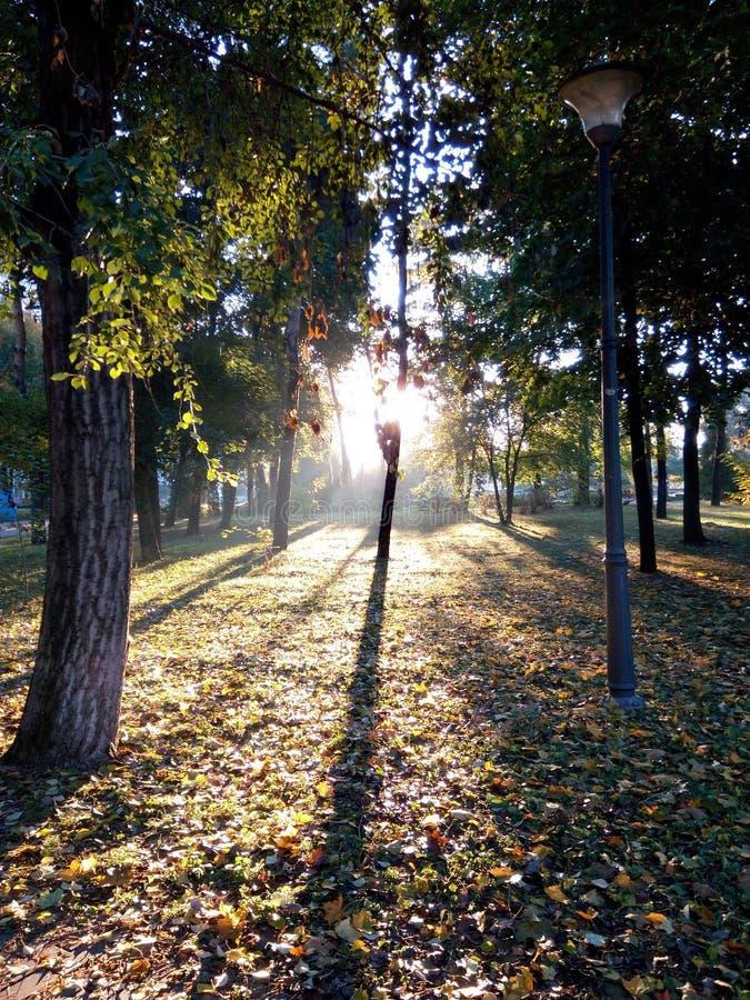 Στο πάρκο στοκ φωτογραφία με δικαίωμα ελεύθερης χρήσης