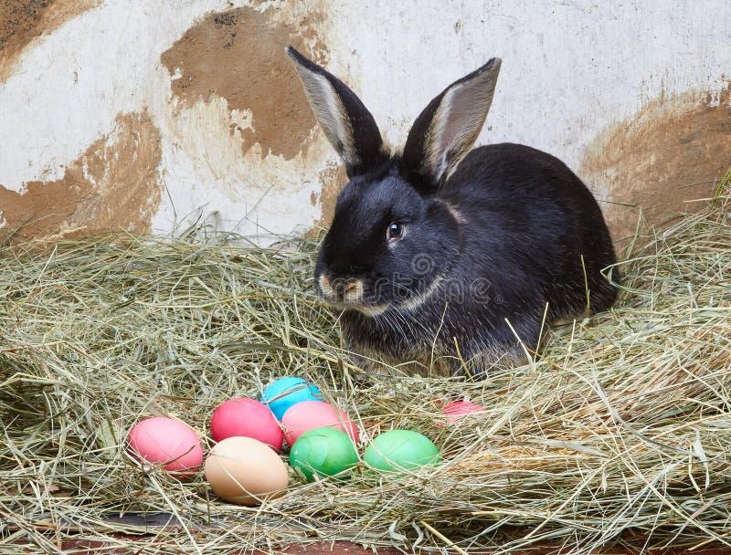 Στο σανό βρίσκεται κουνέλι κοντά στα αυγά Πάσχας στοκ εικόνα με δικαίωμα ελεύθερης χρήσης
