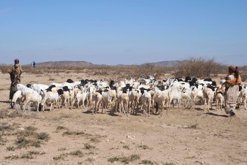 Στο σομαλικό χωριό στοκ φωτογραφία με δικαίωμα ελεύθερης χρήσης