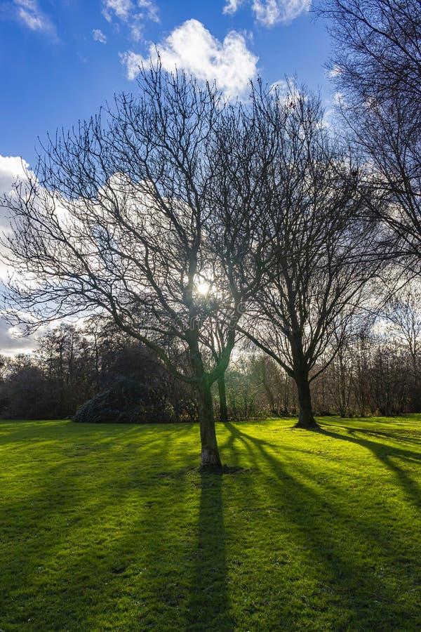 Στο τέλος του χειμώνα, ο χαμηλός ήλιος λάμπει μέσα από τα δέντρα του πάρκου και δίνει όμορφες σκιές στο γρασίδι, Zoterrmeer, Ne στοκ εικόνες με δικαίωμα ελεύθερης χρήσης