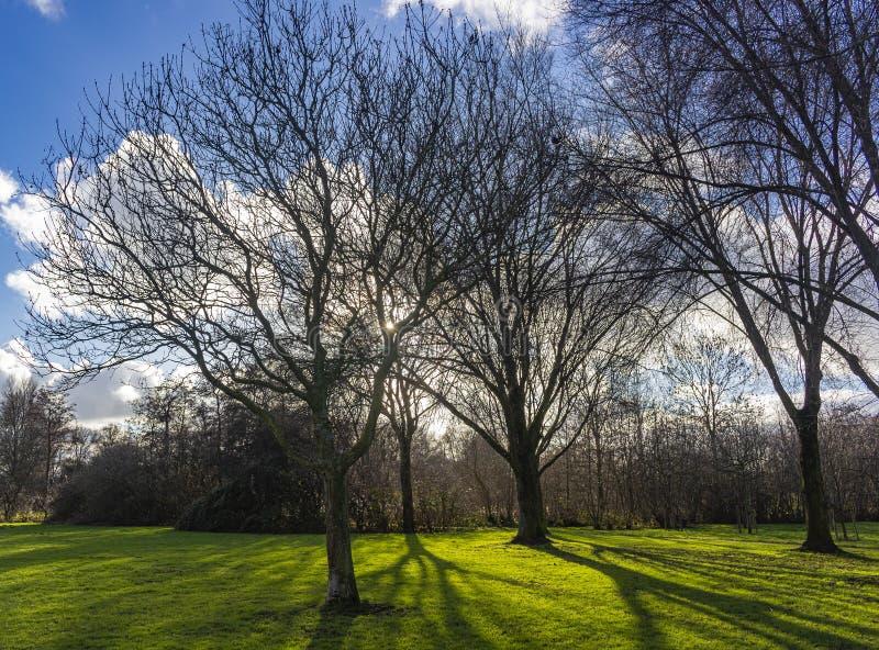 Στο τέλος του χειμώνα, ο χαμηλός ήλιος λάμπει μέσα από τα δέντρα του πάρκου και δίνει όμορφες σκιές στο γρασίδι, Zoterrmeer, Ne στοκ εικόνα με δικαίωμα ελεύθερης χρήσης