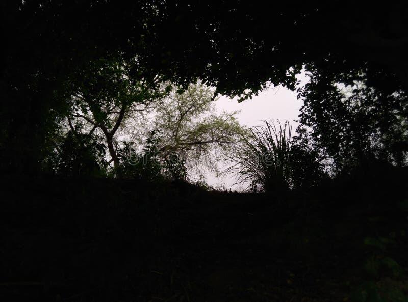 Στο φως στοκ εικόνα με δικαίωμα ελεύθερης χρήσης