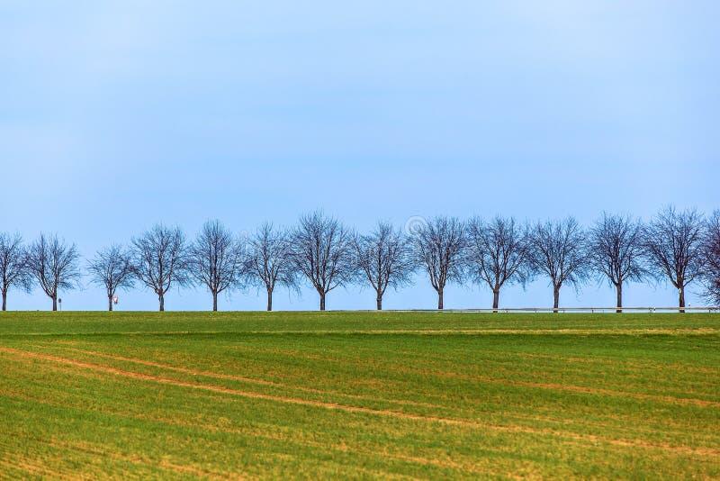 Στρέμμα με τη σειρά των δέντρων στοκ εικόνα