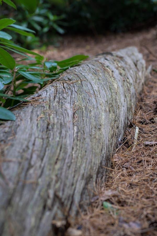 Στρίβοντας τη σύνδεση ένα δάσος στοκ φωτογραφίες με δικαίωμα ελεύθερης χρήσης