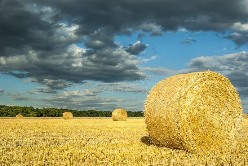 Στρογγυλά δέματα αχύρου στον κομμένο τομέα σιταριού ενάντια στο δραματικό ουρανό με στοκ εικόνα