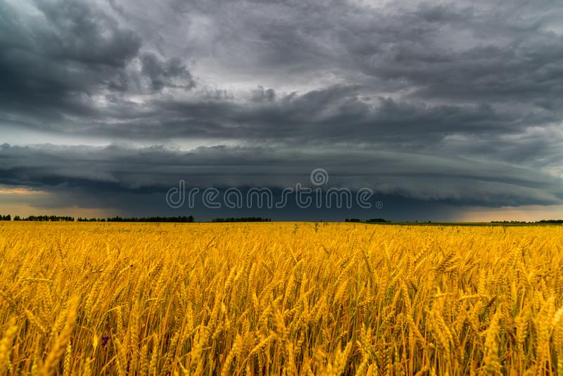 Στρογγυλό σύννεφο θύελλας πέρα από έναν τομέα σίτου Ρωσία στοκ φωτογραφία