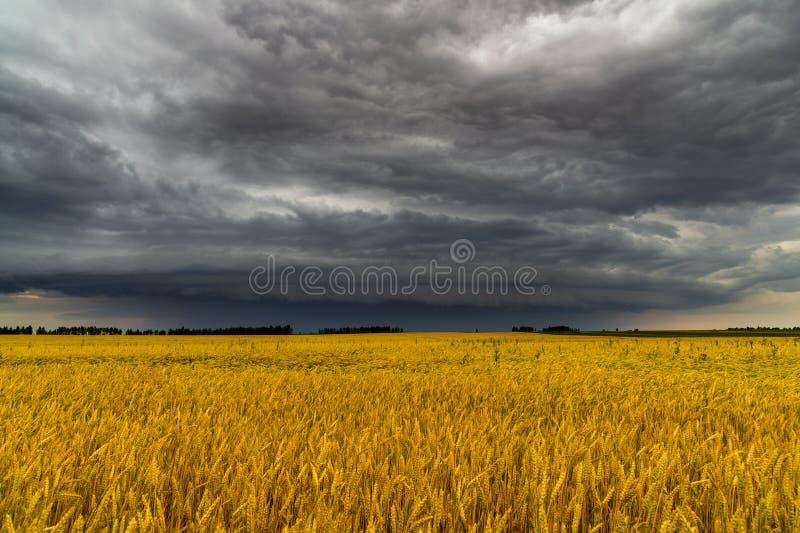 Στρογγυλό σύννεφο θύελλας πέρα από έναν τομέα σίτου Ρωσία στοκ εικόνες