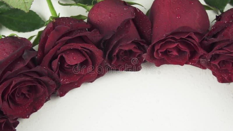 Στρογγυλό πλαίσιο των κόκκινων τριαντάφυλλων με τα σταγονίδια νερού στο άσπρο βίντεο μήκους σε πόδηα αποθεμάτων υποβάθρου σε αργή απόθεμα βίντεο