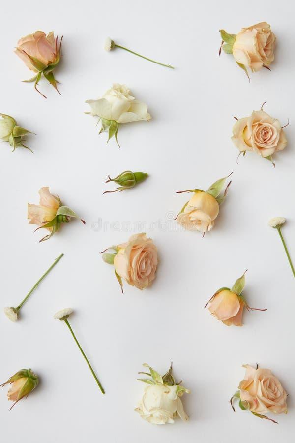 Στρογγυλό πλαίσιο των οφθαλμών τριαντάφυλλων στοκ εικόνα