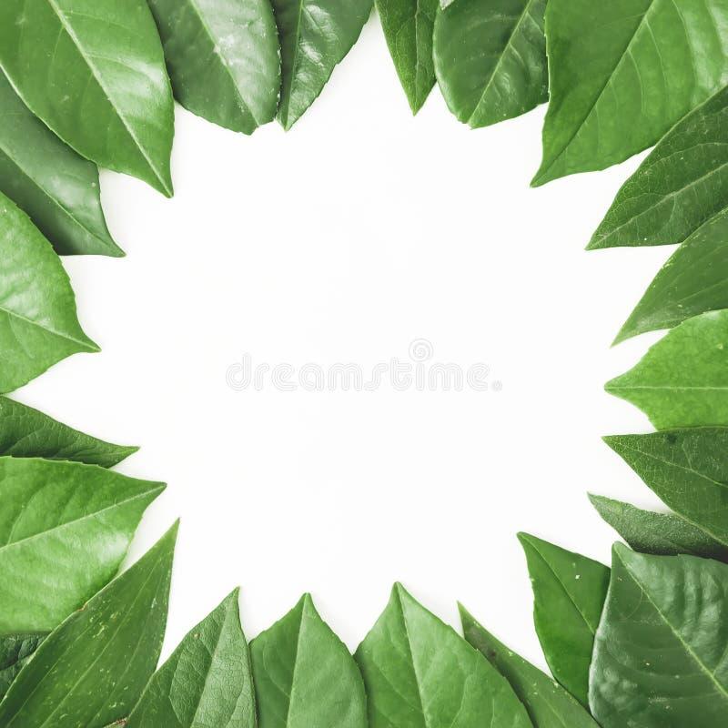 Στρογγυλό πλαίσιο των πράσινων φύλλων Δημιουργικό σχεδιάγραμμα των φύλλων στο άσπρο υπόβαθρο Επίπεδος βάλτε Τοπ όψη στοκ εικόνα με δικαίωμα ελεύθερης χρήσης
