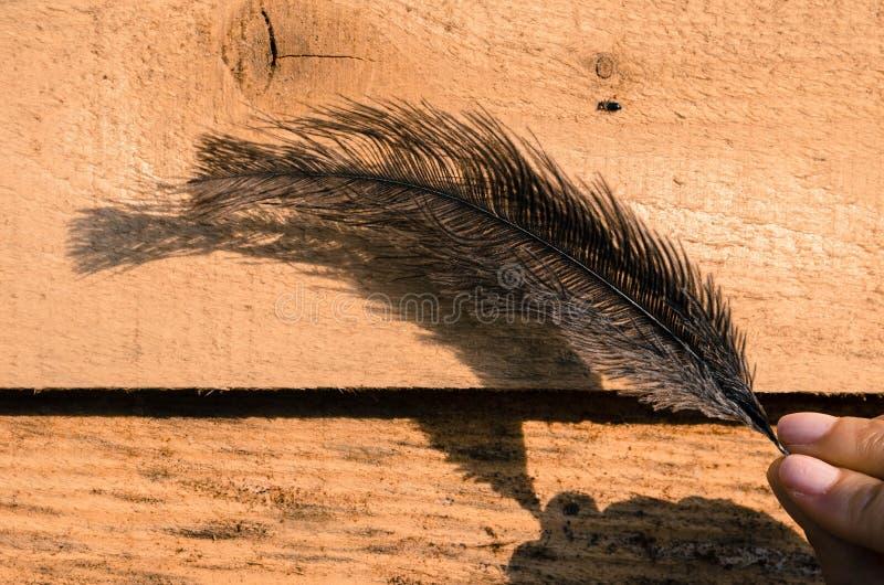Στρουθοκάμηλος feader στοκ φωτογραφίες με δικαίωμα ελεύθερης χρήσης