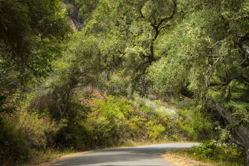 Στρωμένος δρόμος κοντά σε μεγάλο Sur, Καλιφόρνια στοκ φωτογραφία με δικαίωμα ελεύθερης χρήσης
