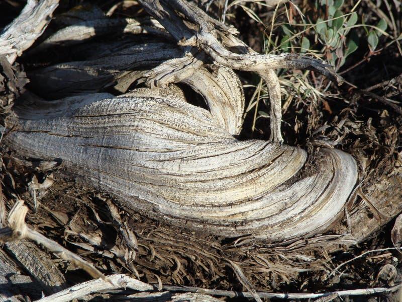 Στρόβιλος Deadwood στοκ εικόνες