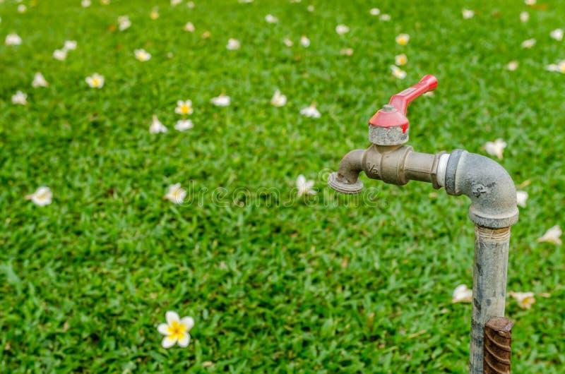 Στρόφιγγα στον κήπο: πράσινο υπόβαθρο και υπόβαθρο κήπων στοκ εικόνα