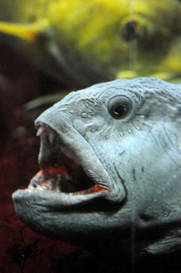 στόμα ψαριών ανοικτό στοκ φωτογραφία με δικαίωμα ελεύθερης χρήσης