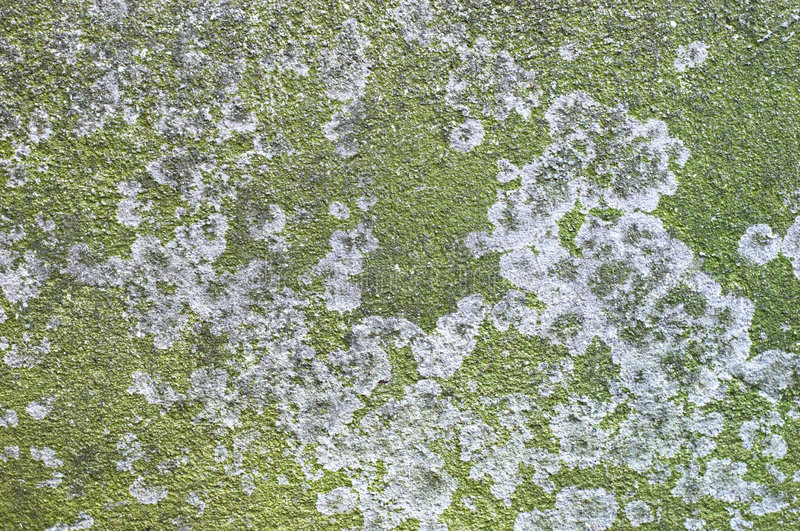 συγκεκριμένη πράσινη πλάκ&alp στοκ φωτογραφία με δικαίωμα ελεύθερης χρήσης