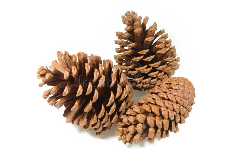 συγκεντρωθείτε το pinecone στοκ φωτογραφίες με δικαίωμα ελεύθερης χρήσης