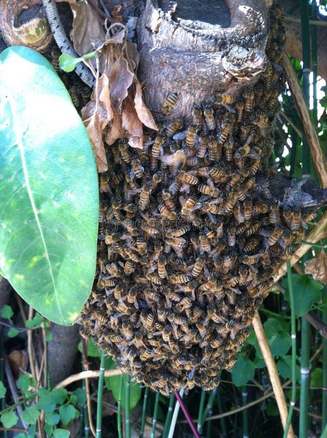 Συγκεντρωμένος με τις μέλισσες στοκ φωτογραφίες με δικαίωμα ελεύθερης χρήσης