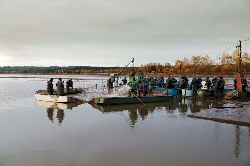 Συγκομίζοντας λίμνη στοκ εικόνες με δικαίωμα ελεύθερης χρήσης
